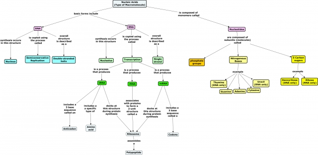 Nucleic Acid Concept Map Nucleic Acids Concept Map